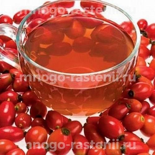 Шиповник плодовый Воронцовский 3